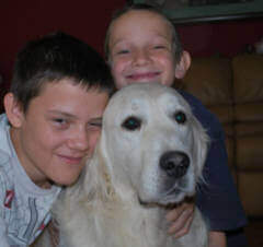 English Golden Retriver male with our Grandsons in Texas TX